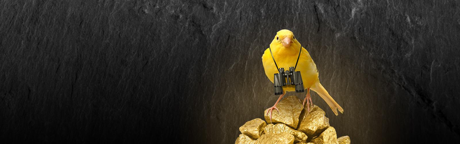slide-canary1